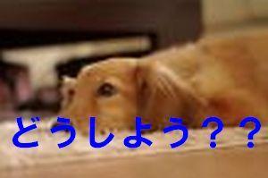 000776_li.jpg